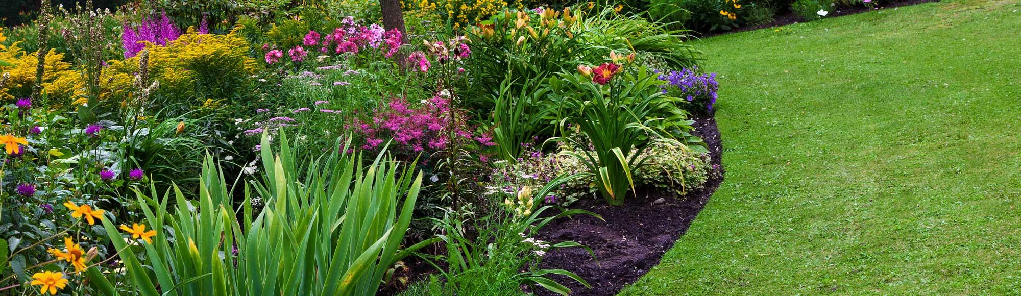 Foto eines Gartens