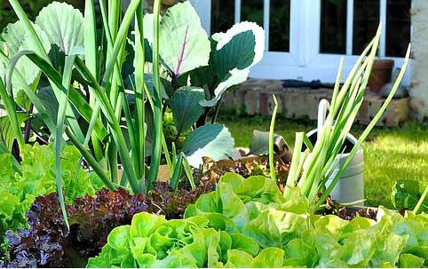 Foto eines Gemüsebeets
