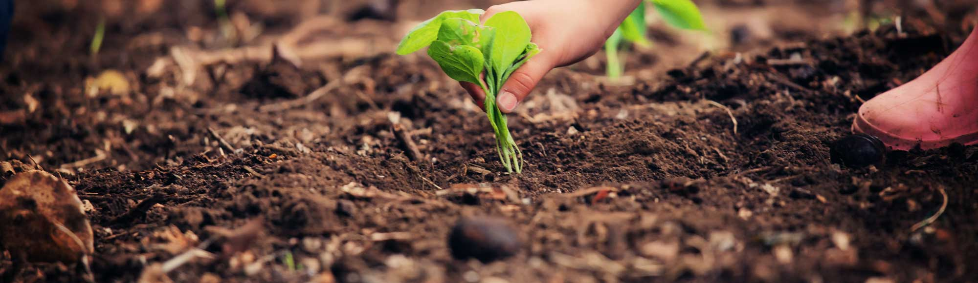 Bild einer Pflanze